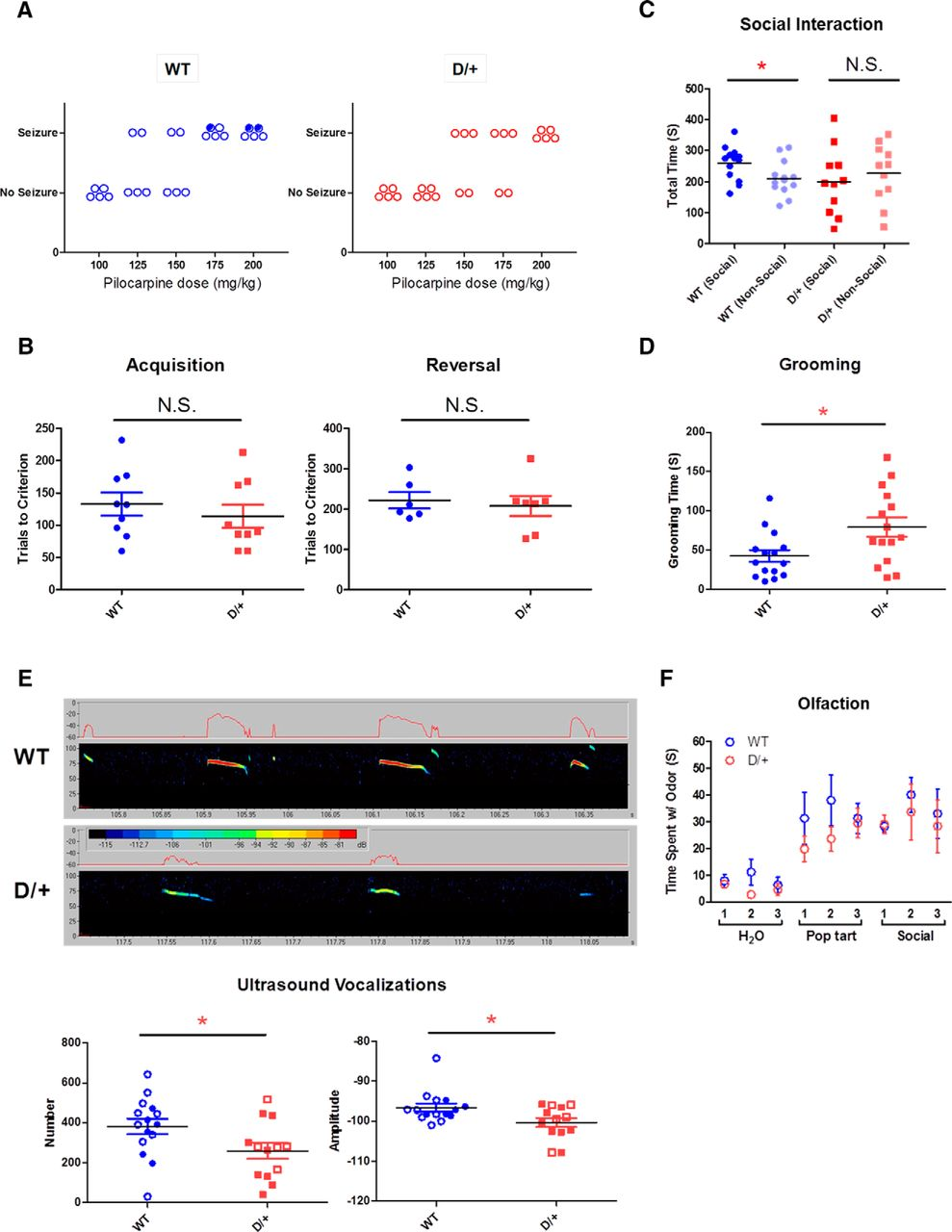 Mouse Model of Chromosome 15q13 3 Microdeletion Syndrome