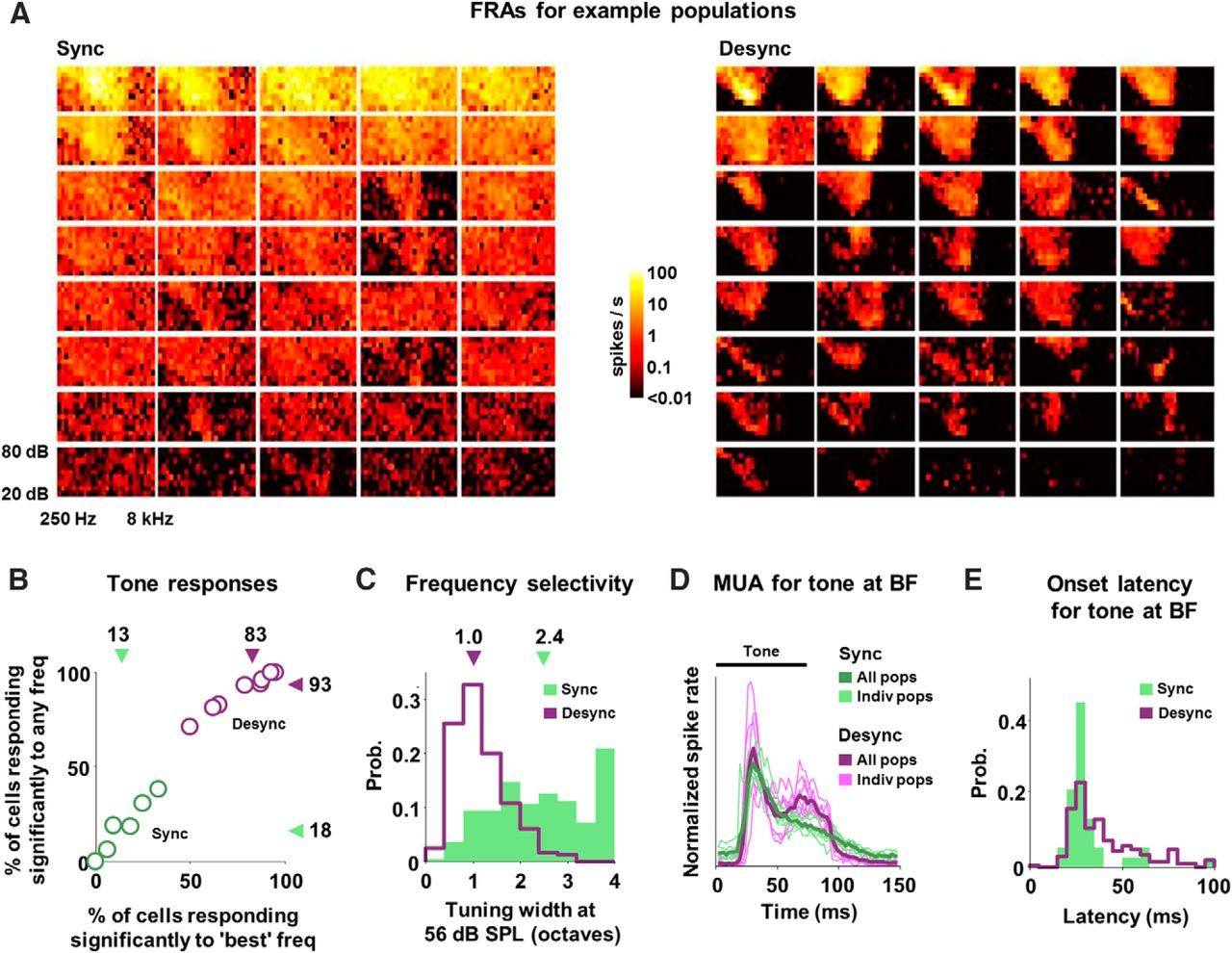 State-Dependent Population Coding in Primary Auditory Cortex