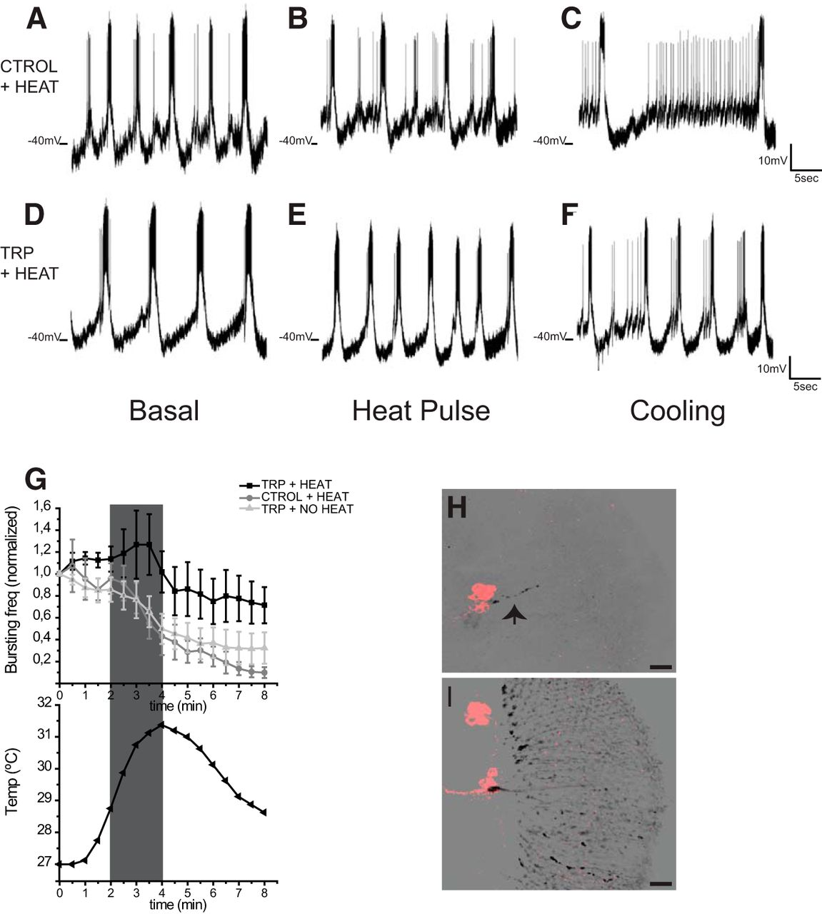 Acetylcholine From Visual Circuits Modulates The Activity Of Arousal How To Make A Light Activated Day Night Switch Circuit Science Download Figure