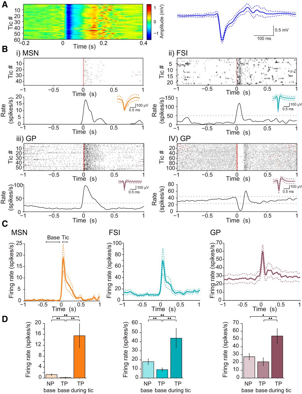Corticostriatal Divergent Function In Determining The Temporal And Figure 1 A Parallel Circuit Left Its Corresponding Diagram Download