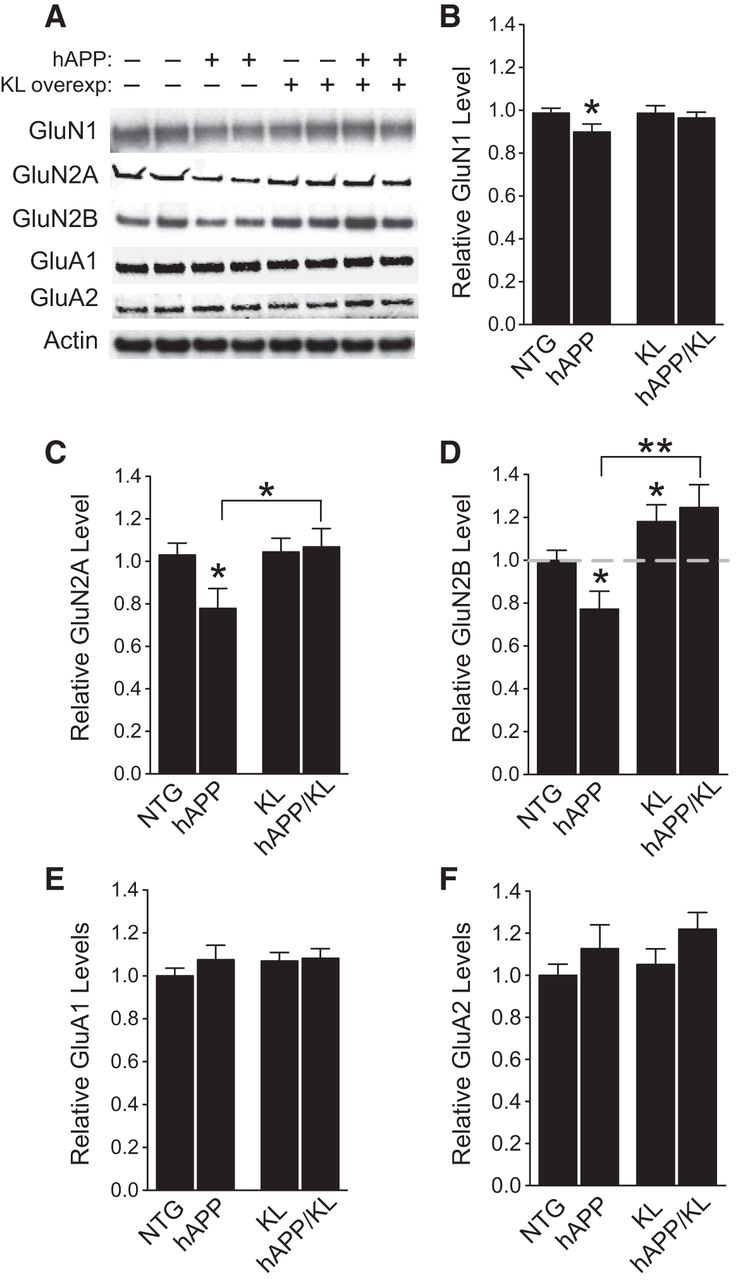 Life Extension Factor Klotho Prevents Mortality And Enhances Wiring Diagram For Ih 234 Download Figure