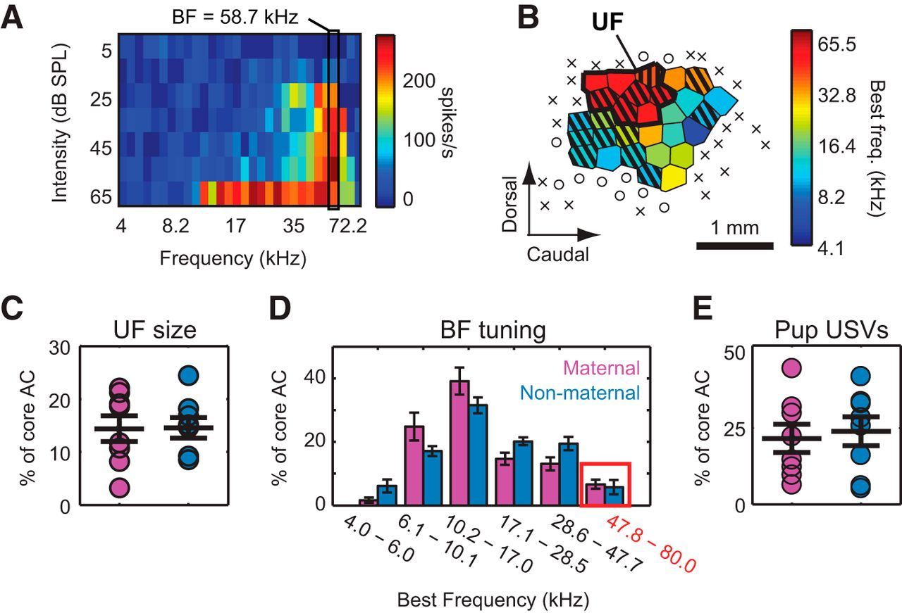 Behavioral Relevance Helps Untangle Natural Vocal Categories In A Mimi 24 Pin Wiring Diagram Download Figure