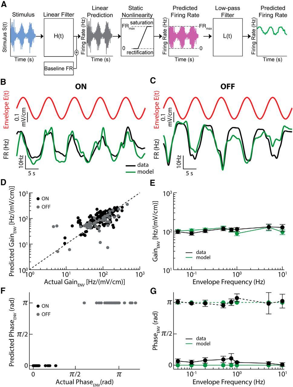 Neural Heterogeneities Determine Response Characteristics To Second Envelope Schematic Download Figure