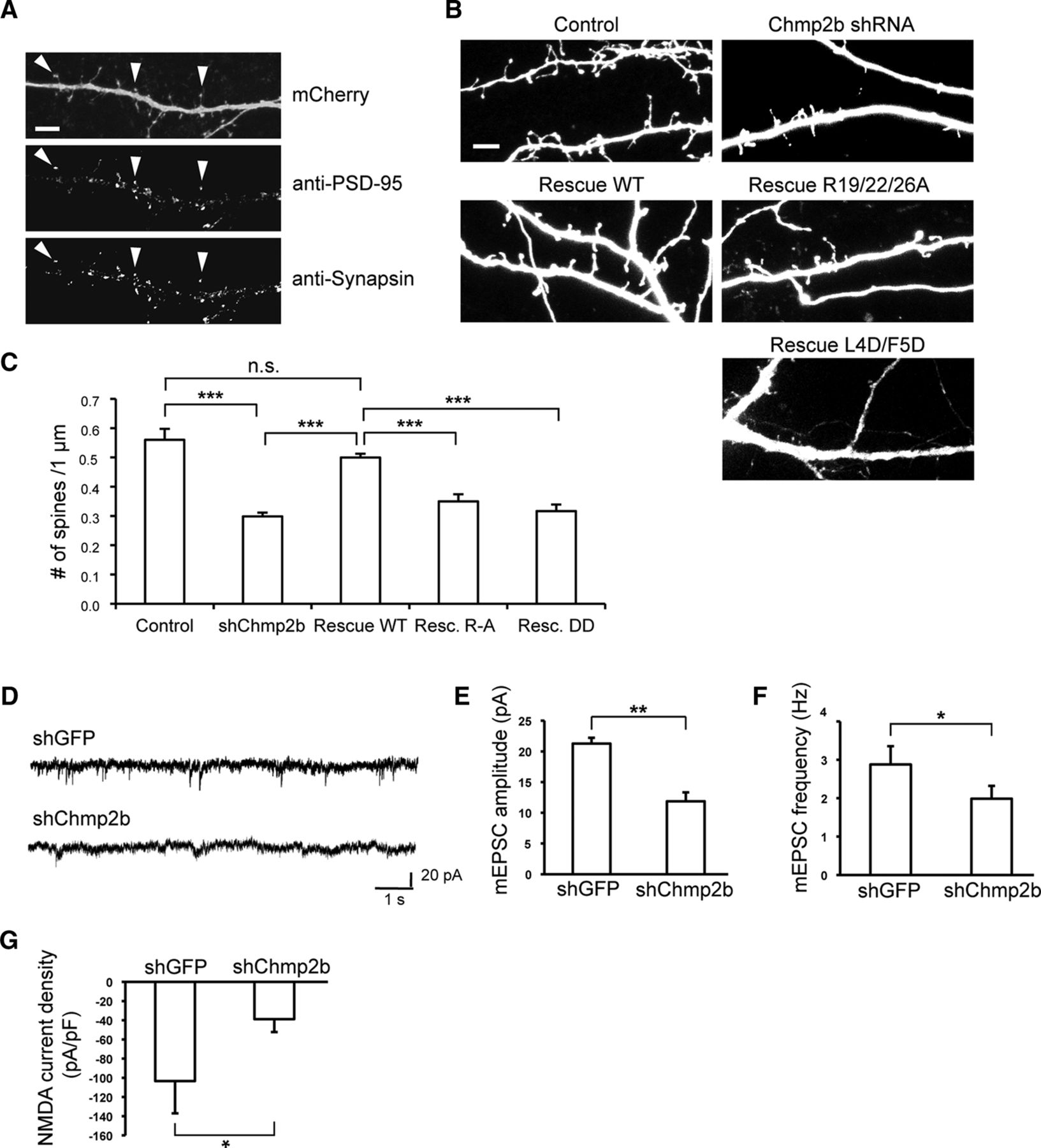 Regulation Of Postsynaptic Function By The Dementia Related Escrt Sprague Wiring Diagram Heated Mirrors Download Figure
