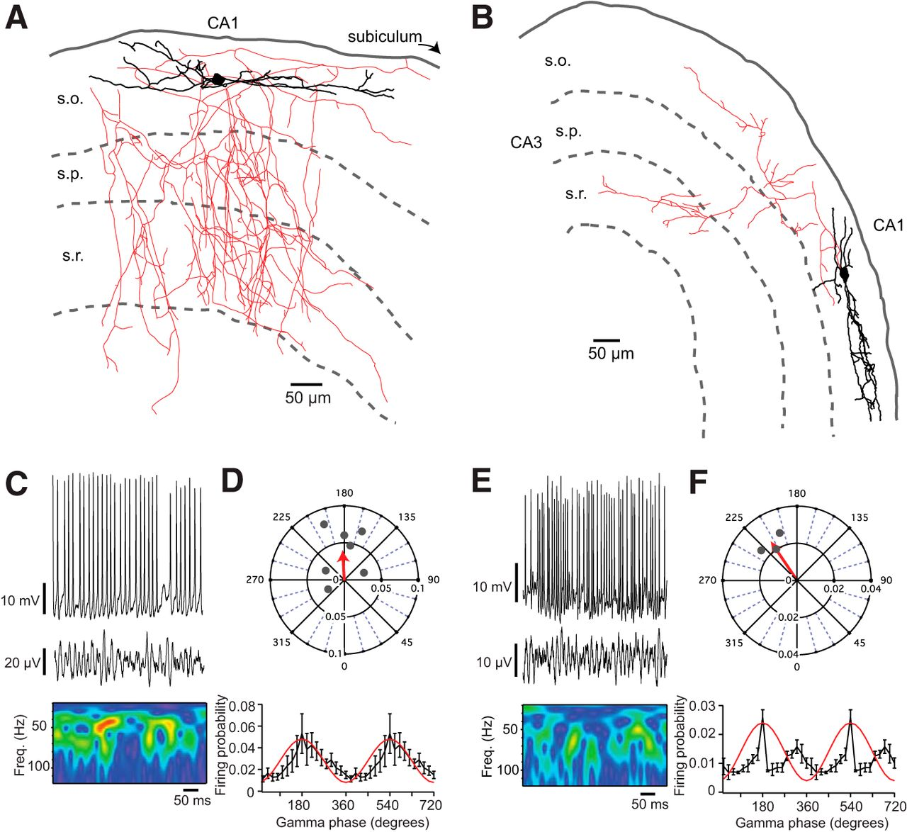 Fast Gamma Oscillations Are Generated Intrinsically In Ca1 Without 360 Degree Diagram Related Keywords Suggestions Download Figure