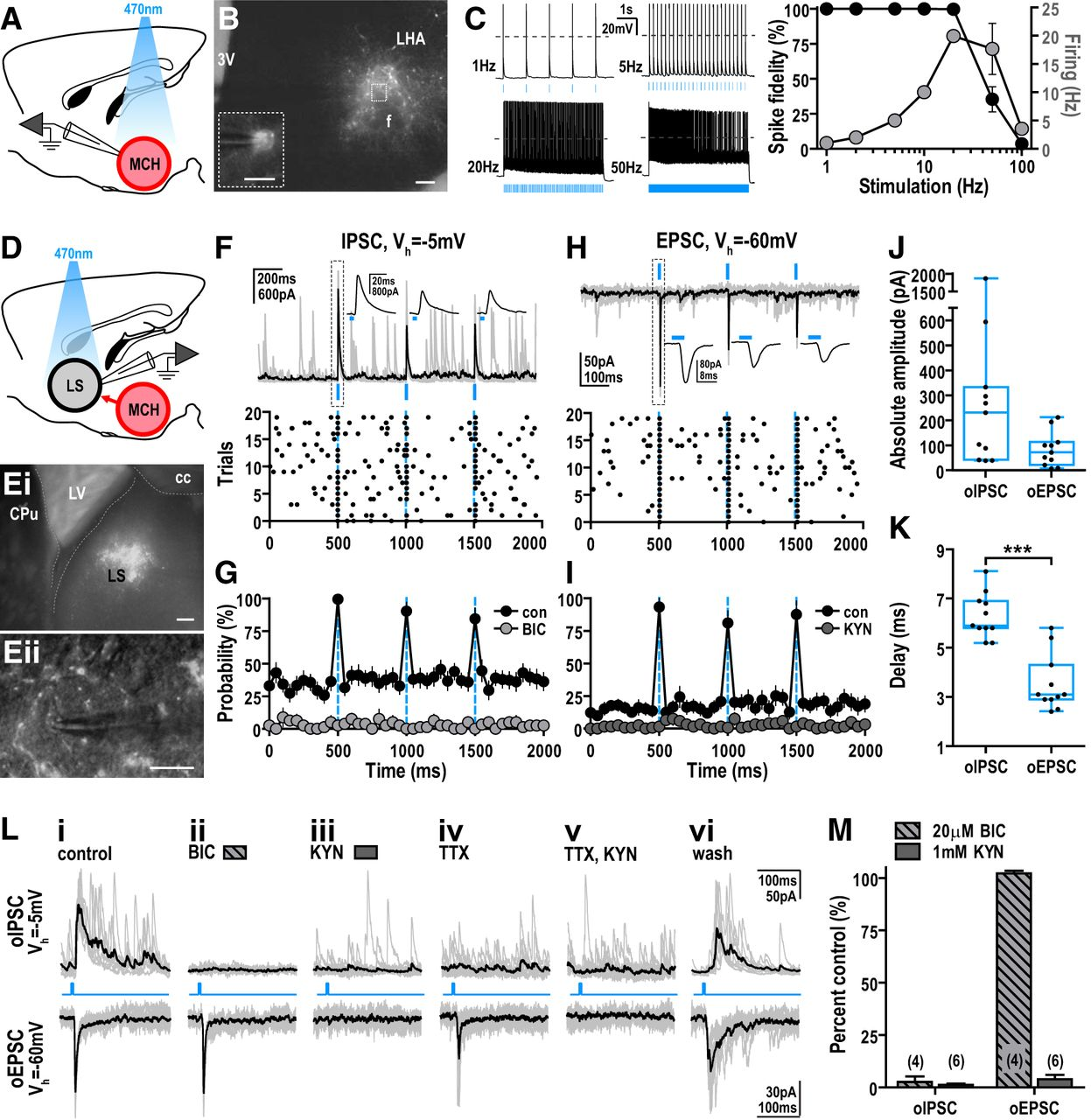 Melanin Concentrating Hormone Neurons Release Glutamate For New Holland Wiring Diagrams 75b Download Figure Open In Tab