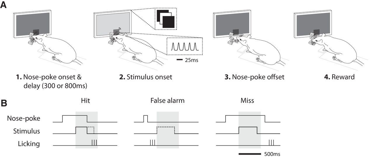 Diagram Of Rat Nose - Auto Wiring Diagram Today •