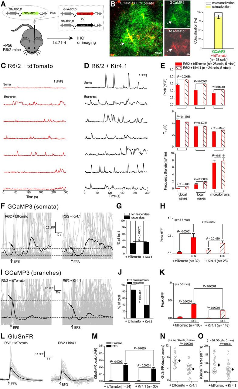 Dysfunctional Calcium and Glutamate Signaling in Striatal
