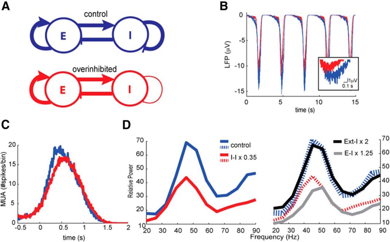Overexpression Of Dyrk1a A Down Syndrome Candidate Decreases Diagram For Wiring 8 Pin Nr 51 Download Figure