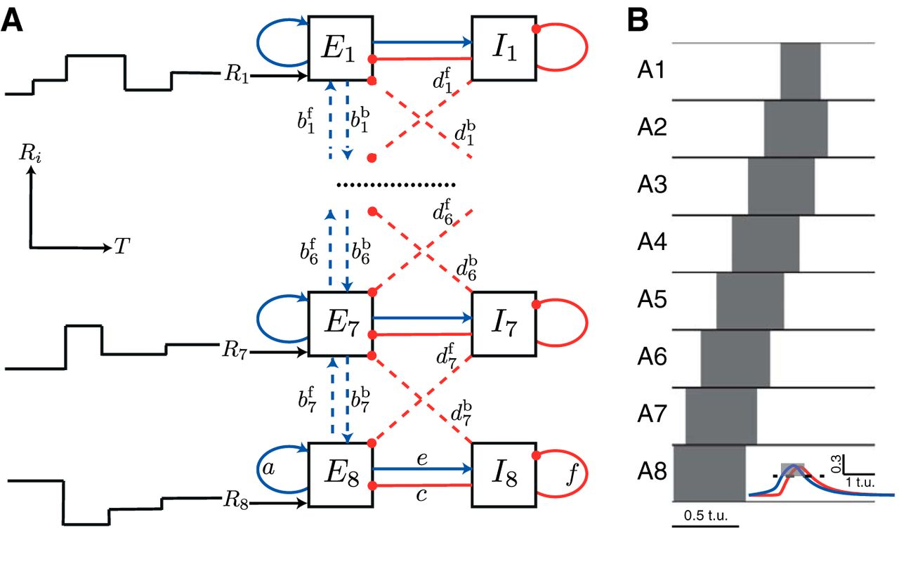 Homeostatic Activity Dependent Tuning Of Recurrent Networks For Egg Timer Circuit Download Figure