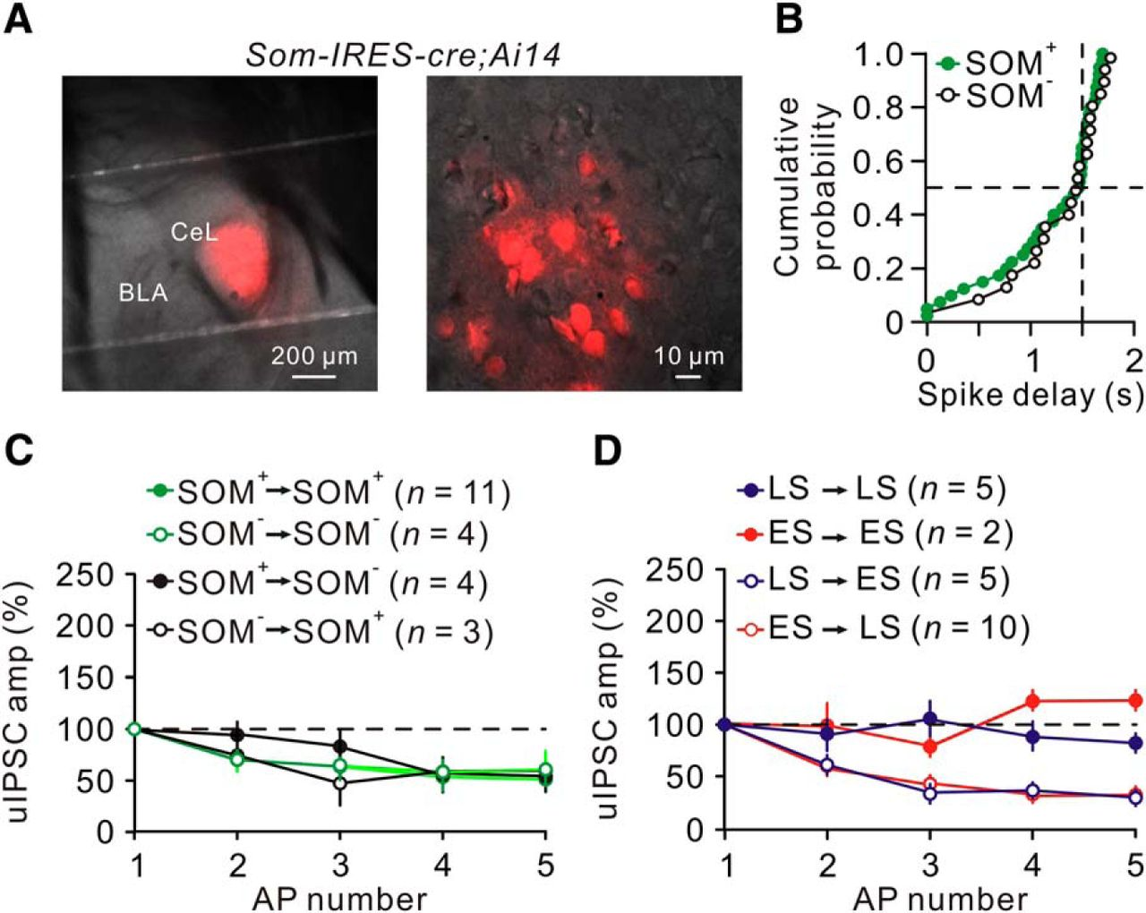 Wiring Specificity And Synaptic Diversity In The Mouse