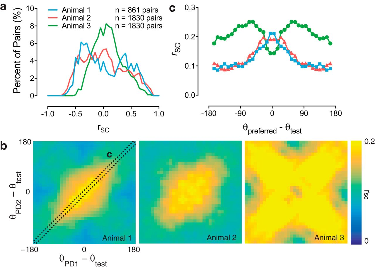 Rapid Adaptation Induces Persistent Biases in Population