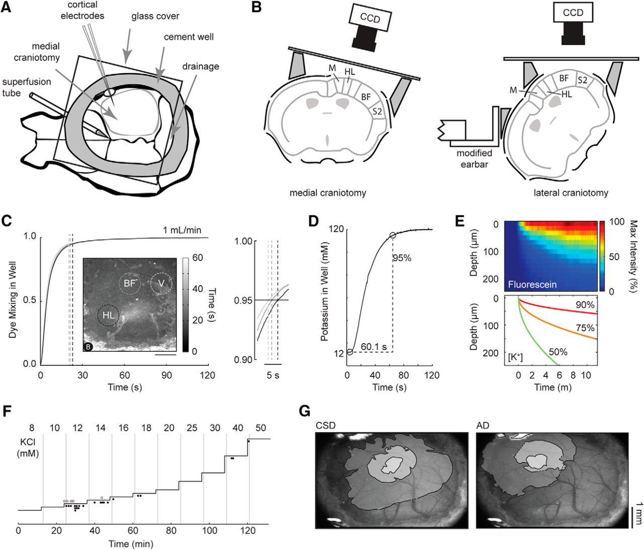 Susceptibility Of Primary Sensory Cortex To Spreading Jc 120 Evo Ignition Wiring Diagram Download Figure