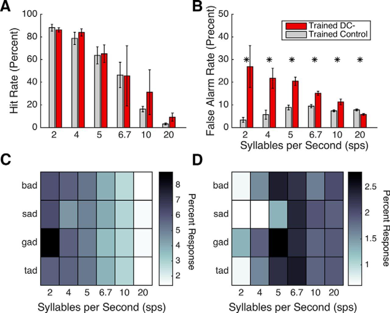 Knockdown of Dyslexia-Gene Dcdc2 Interferes with Speech Sound