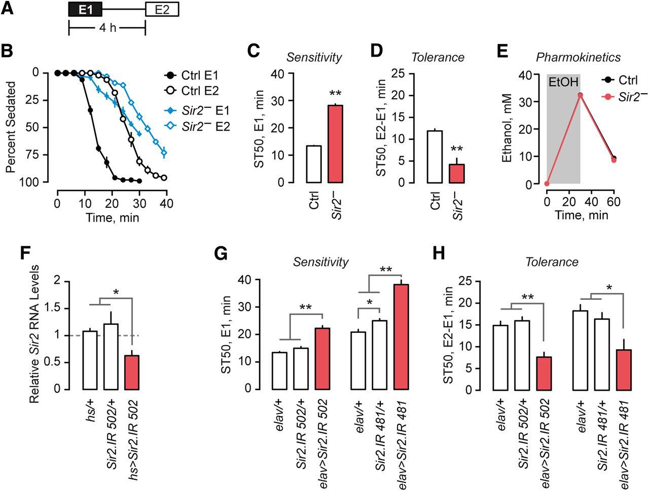 Sir2sirt1 links acute inebriation to presynaptic changes and the download figure buycottarizona