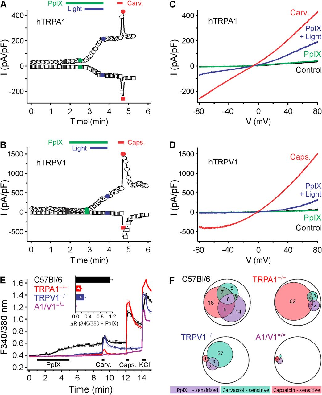 Photosensitization In Porphyrias And Photodynamic Therapy Involves Pin Related Pictures Animal Cell Diagram Using Free Printable Venn On Download Figure