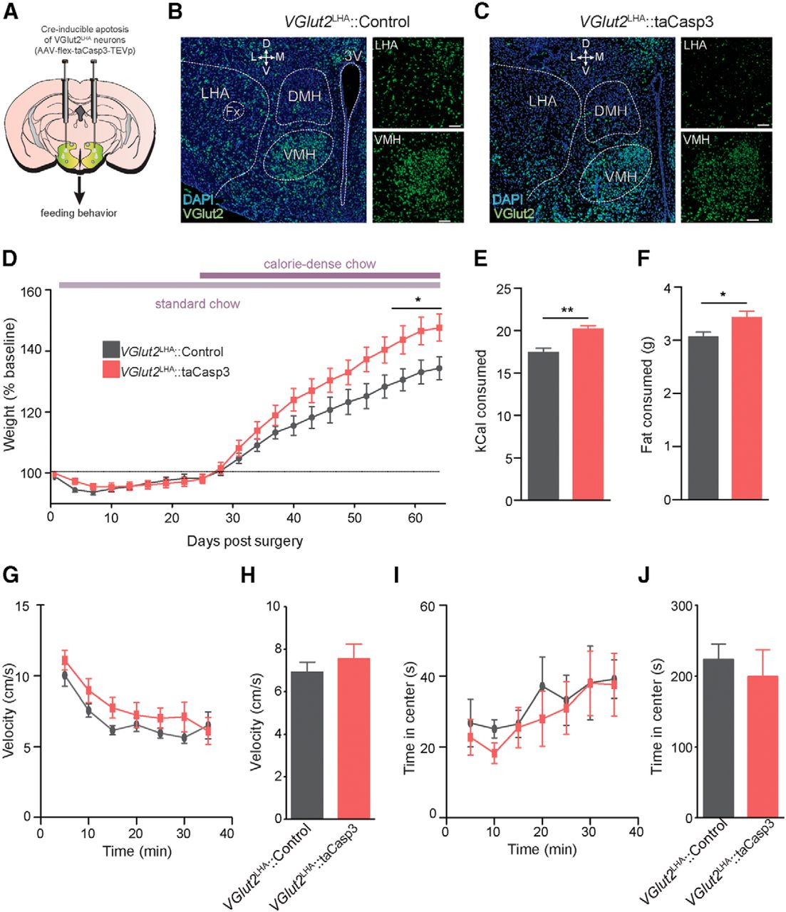 Lateral Hypothalamic Area Glutamatergic Neurons and Their ...