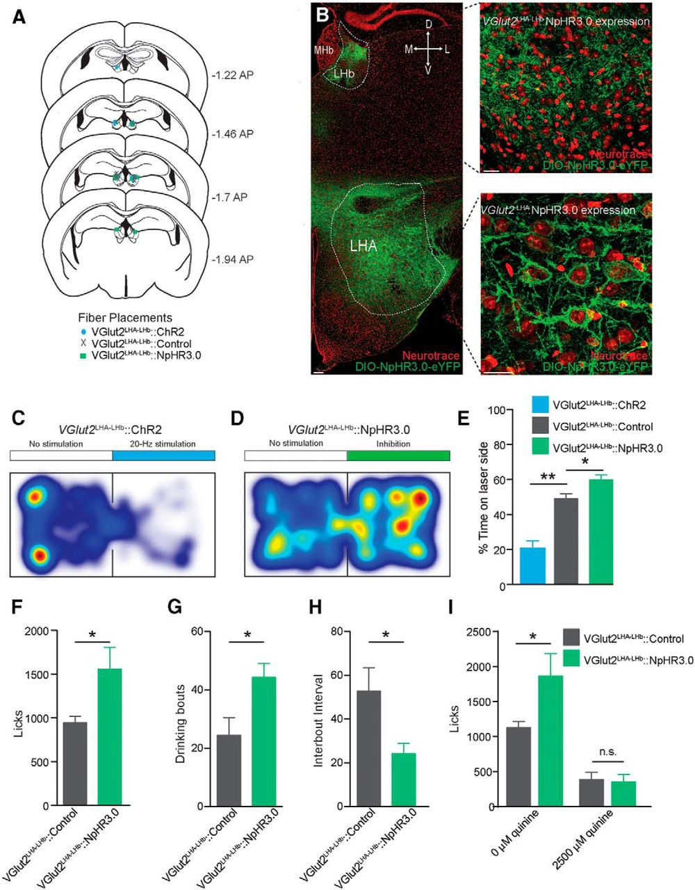 Lateral Hypothalamic Area Glutamatergic Neurons And Their Schematic Diagram Of Optical Fiber Download Figure