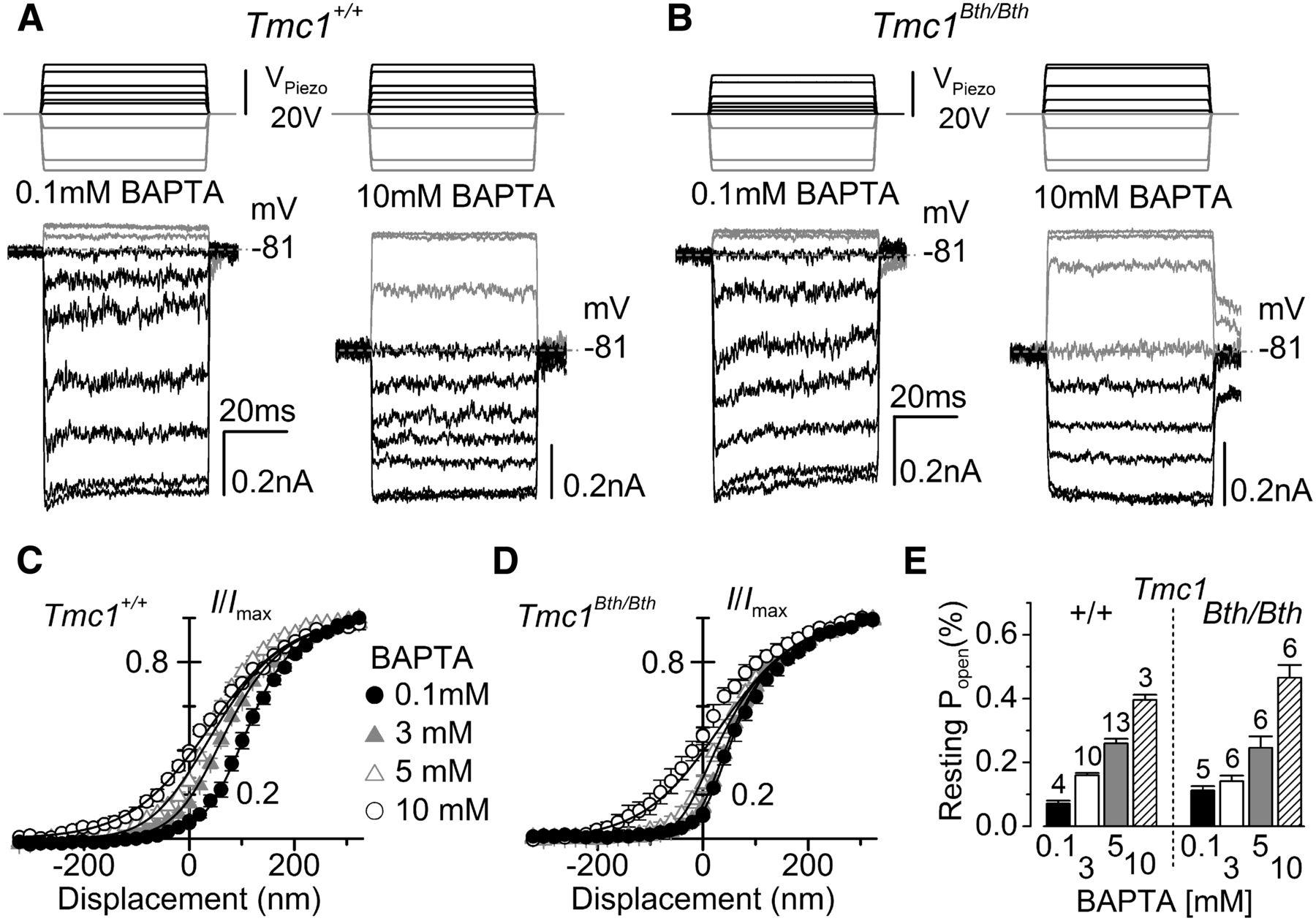 Tmc1 Point Mutation Affects Ca2 Sensitivity And Block By Piezo Driver Amplifier Modulator A303 Download Figure