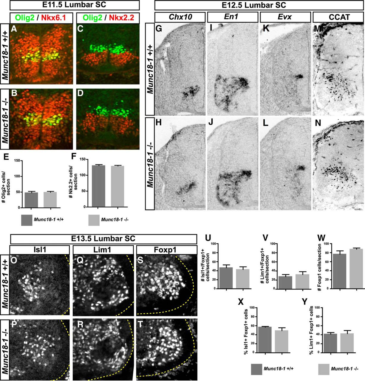normal molecular specification and neurodegenerative disease like