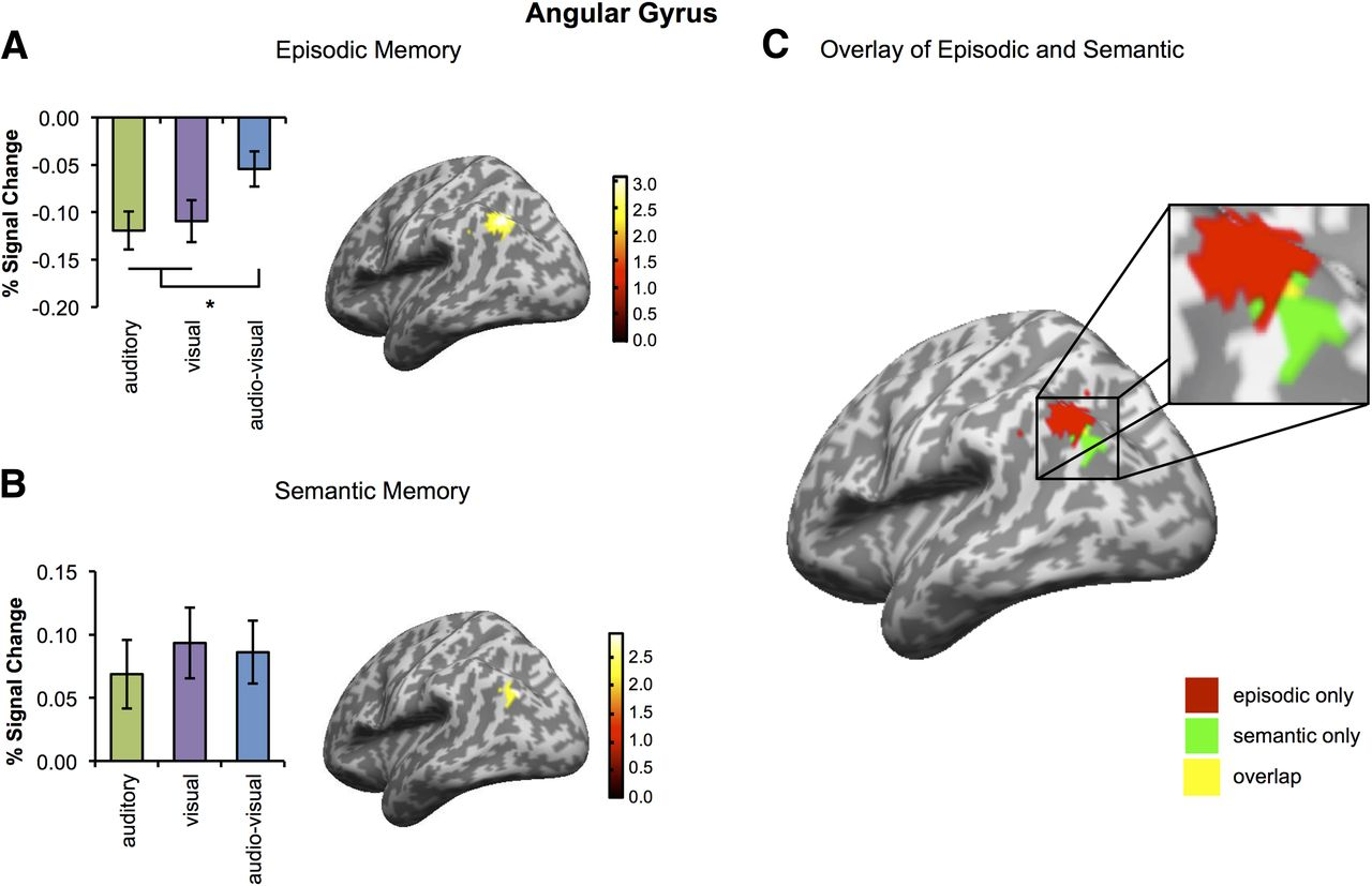 Multimodal Feature Integration in the Angular Gyrus during Episodic ...