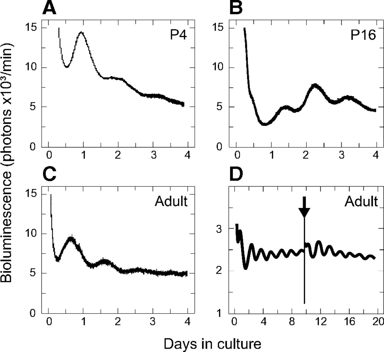 Identification of a Circadian Clock in the Inferior