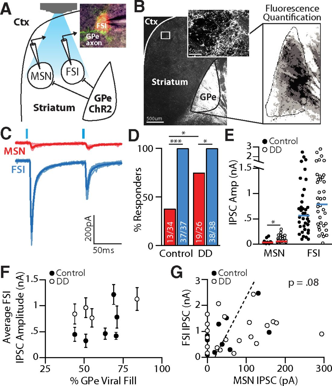 Pallidostriatal Projections Promote β Oscillations in a