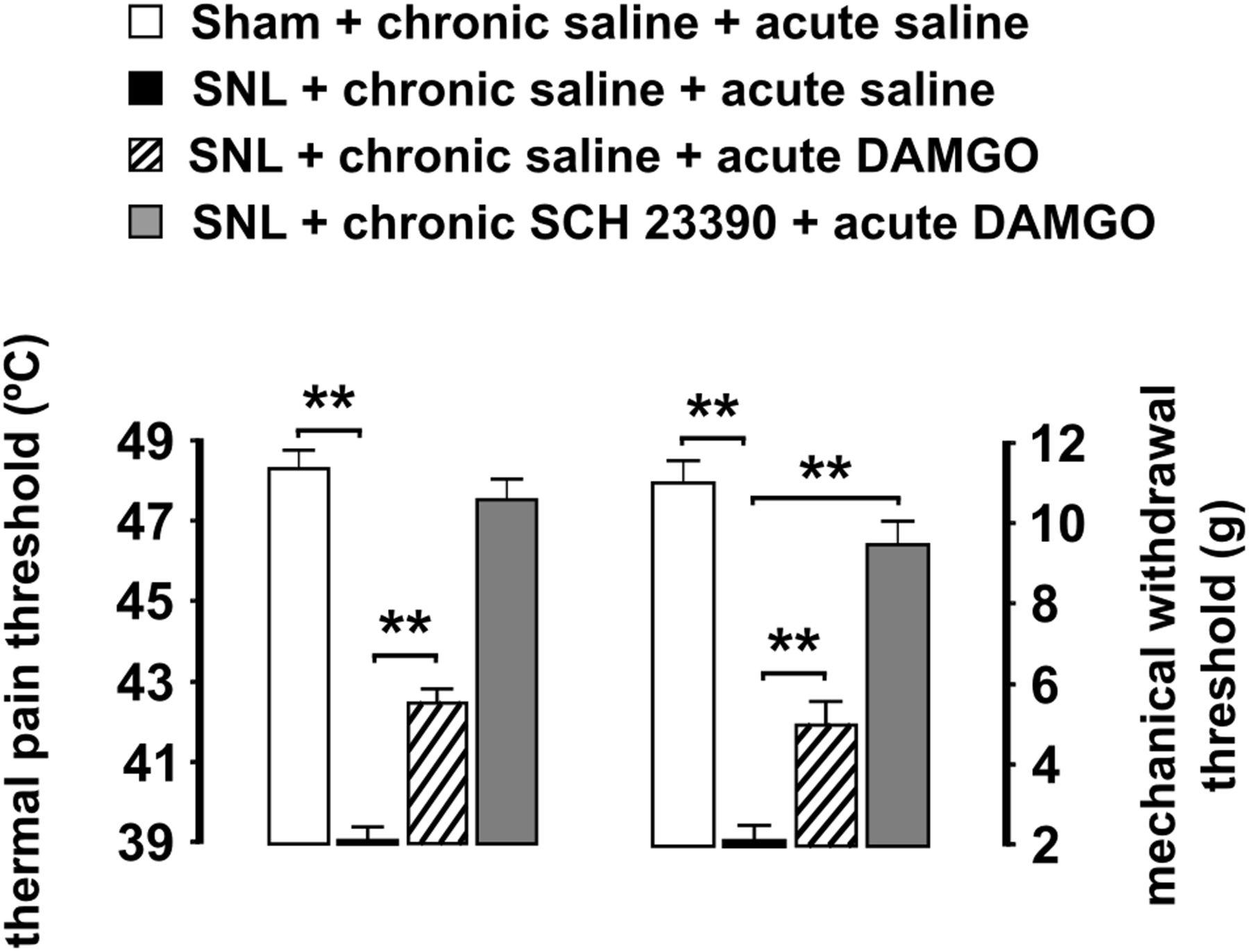 Dopamine D1 Like Receptors Regulate Constitutive Opioid Receptor Astatic Jt 30 Wiring Diagram Download Figure