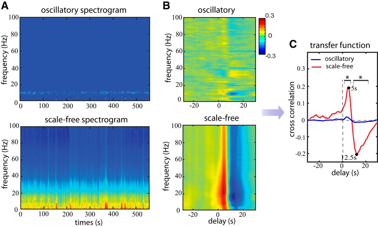 Broadband Electrophysiological Dynamics Contribute to Global