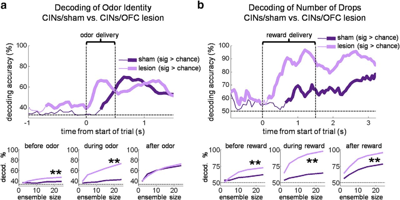 Cholinergic Interneurons Use Orbitofrontal Input to Track Beliefs ...