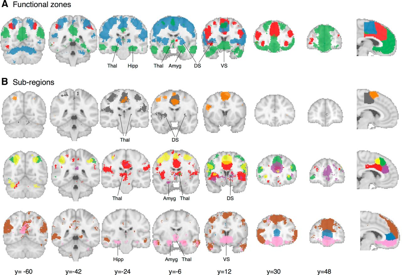 Large-Scale Meta-Analysis of Human Medial Frontal Cortex
