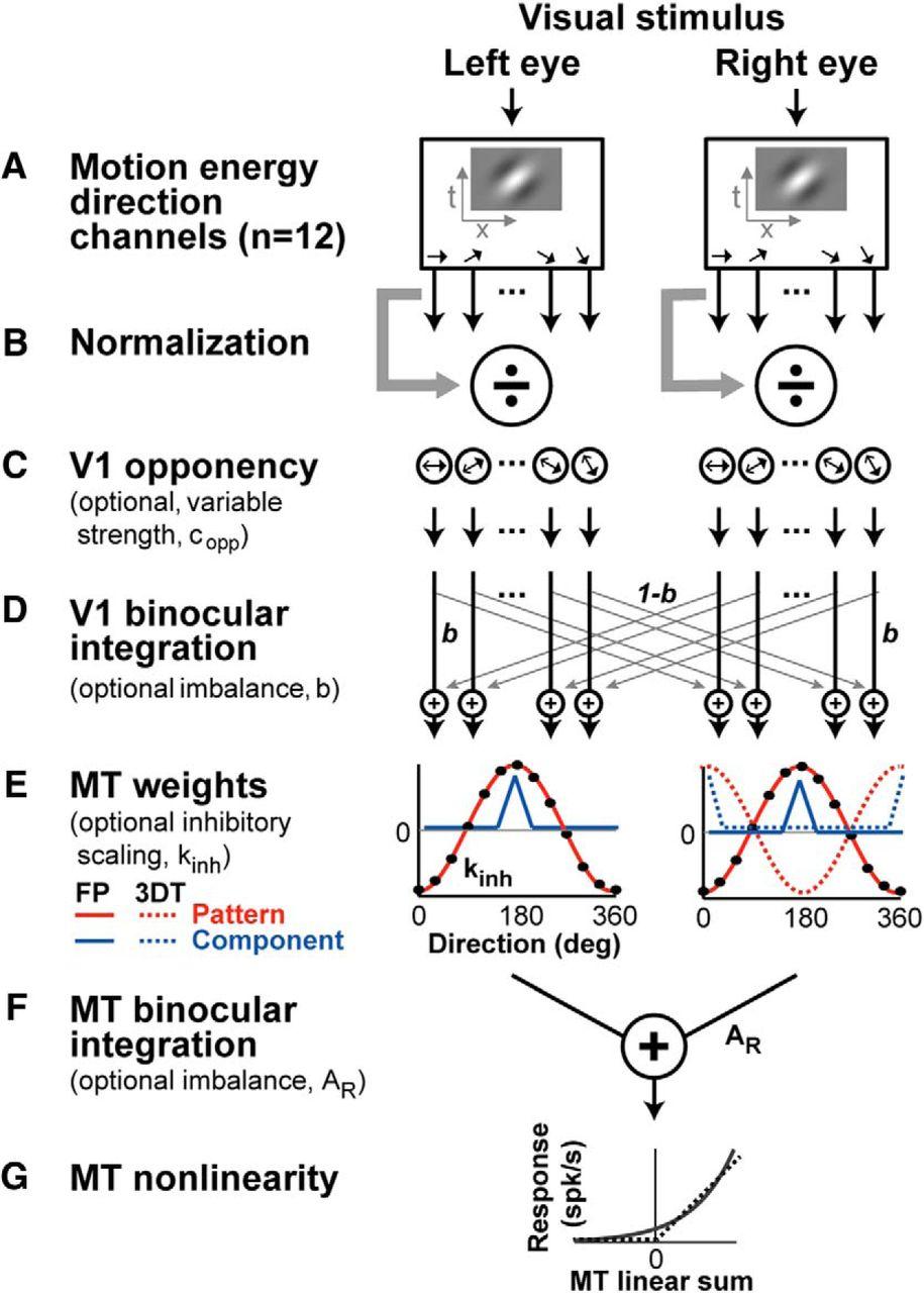 A Model Of Binocular Motion Integration In Mt Neurons Journal Process Flow Diagram Optional Steps Download Figure