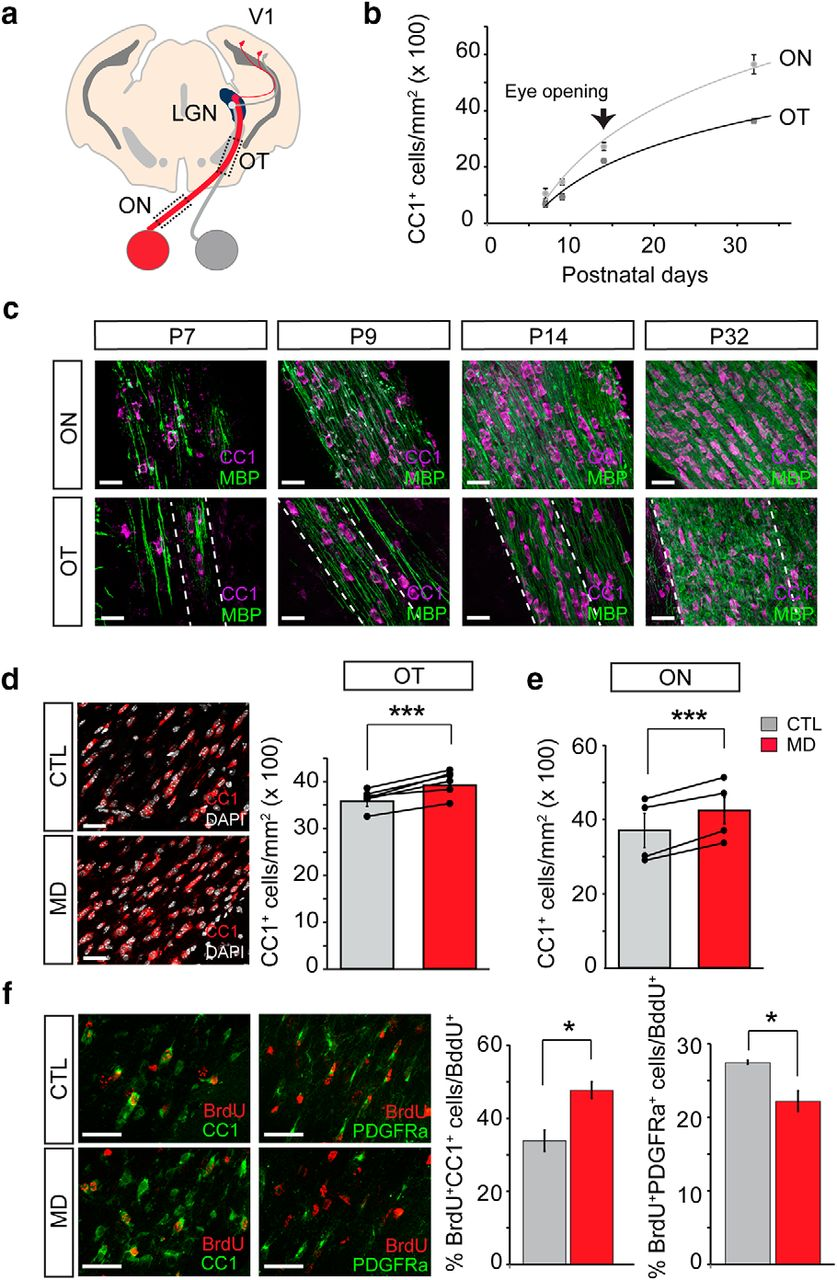 Dynamic modulation of myelination in response to visual stimuli download figure ccuart Choice Image