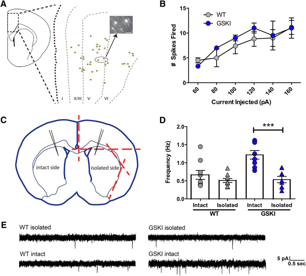 Altered Development Of Synapse Structure And Function In Striatum Pal Decoder Block Diagram Download Figure