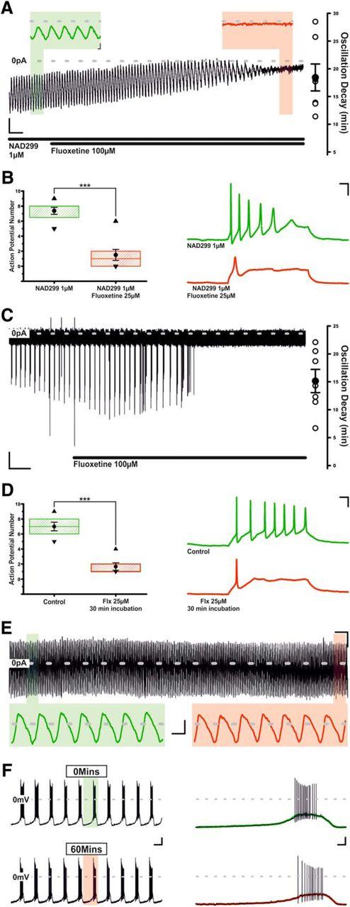Serotonin and Antidepressant SSRIs Inhibit Rat