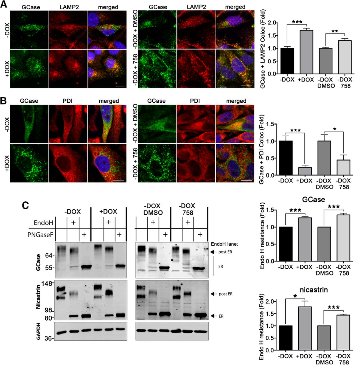 Activation of β-Glucocerebrosidase Reduces Pathological α-Synuclein