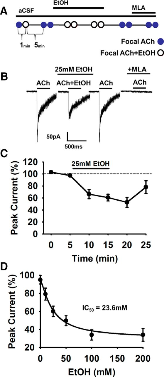 F2.large ethanol induced motor impairment mediated by inhibition of �7  at reclaimingppi.co