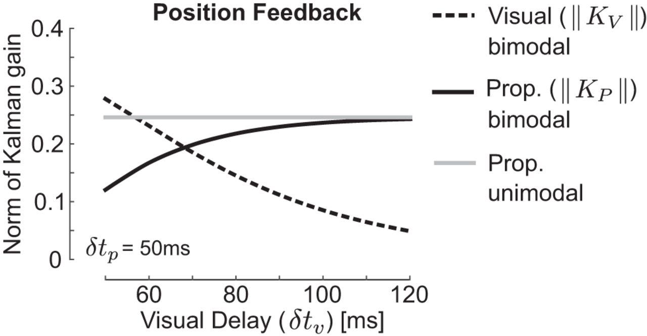Dynamic Multisensory Integration: Somatosensory Speed Trumps Visual ...