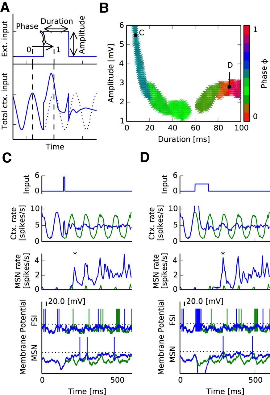 The Role of Striatal Feedforward Inhibition in the Maintenance of