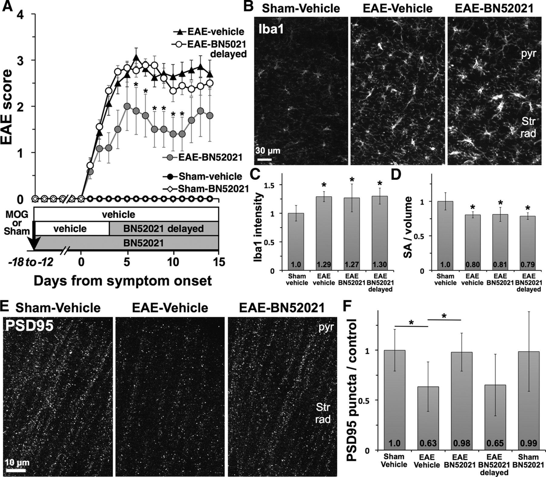 Platelet activating factor receptors mediate excitatory download figure sciox Choice Image