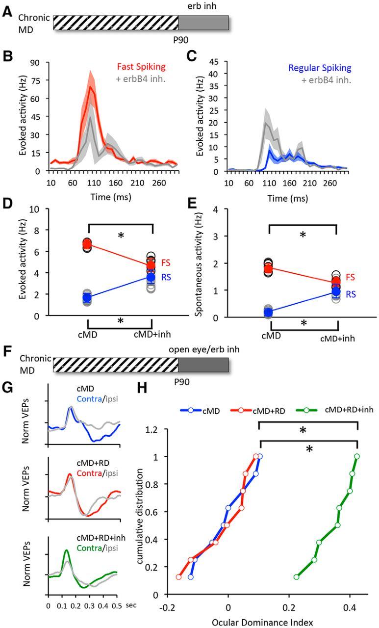 Neuregulin-Dependent Regulation of Fast-Spiking Interneuron ...
