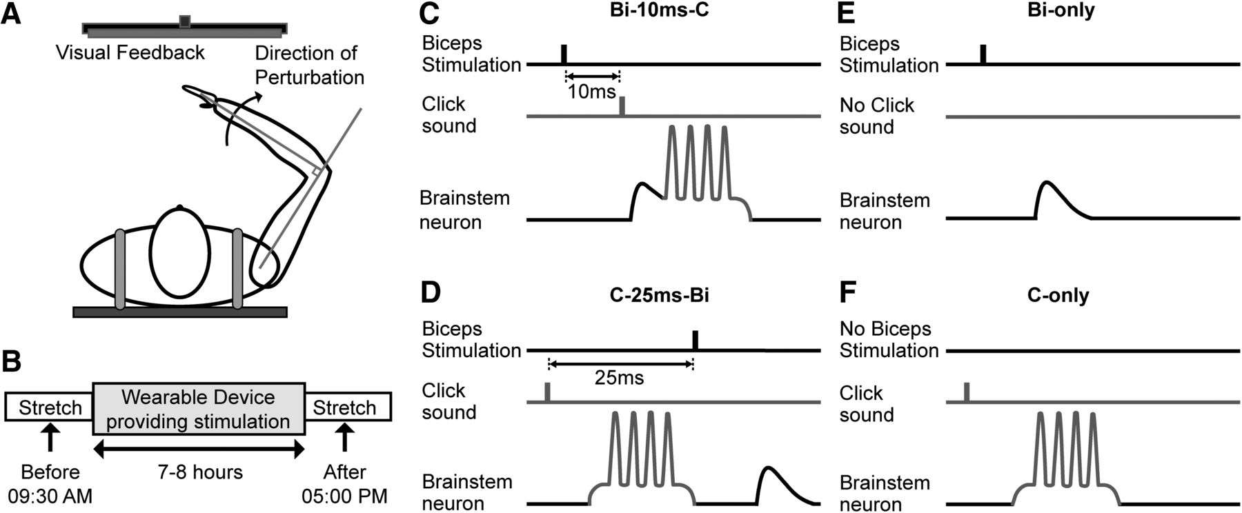 Spike Timing-Dependent Plasticity in the Long-Latency Stretch Reflex ...