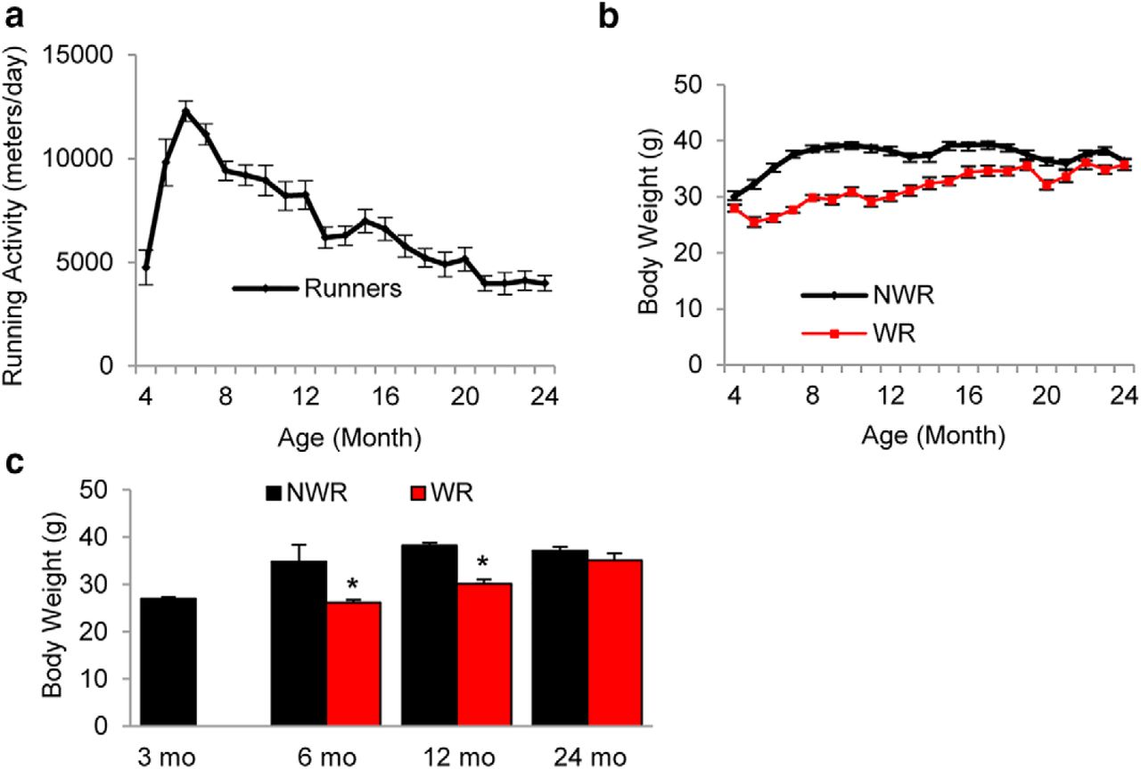 Effects of long term exercise on age related hearing loss in mice download figure geenschuldenfo Image collections