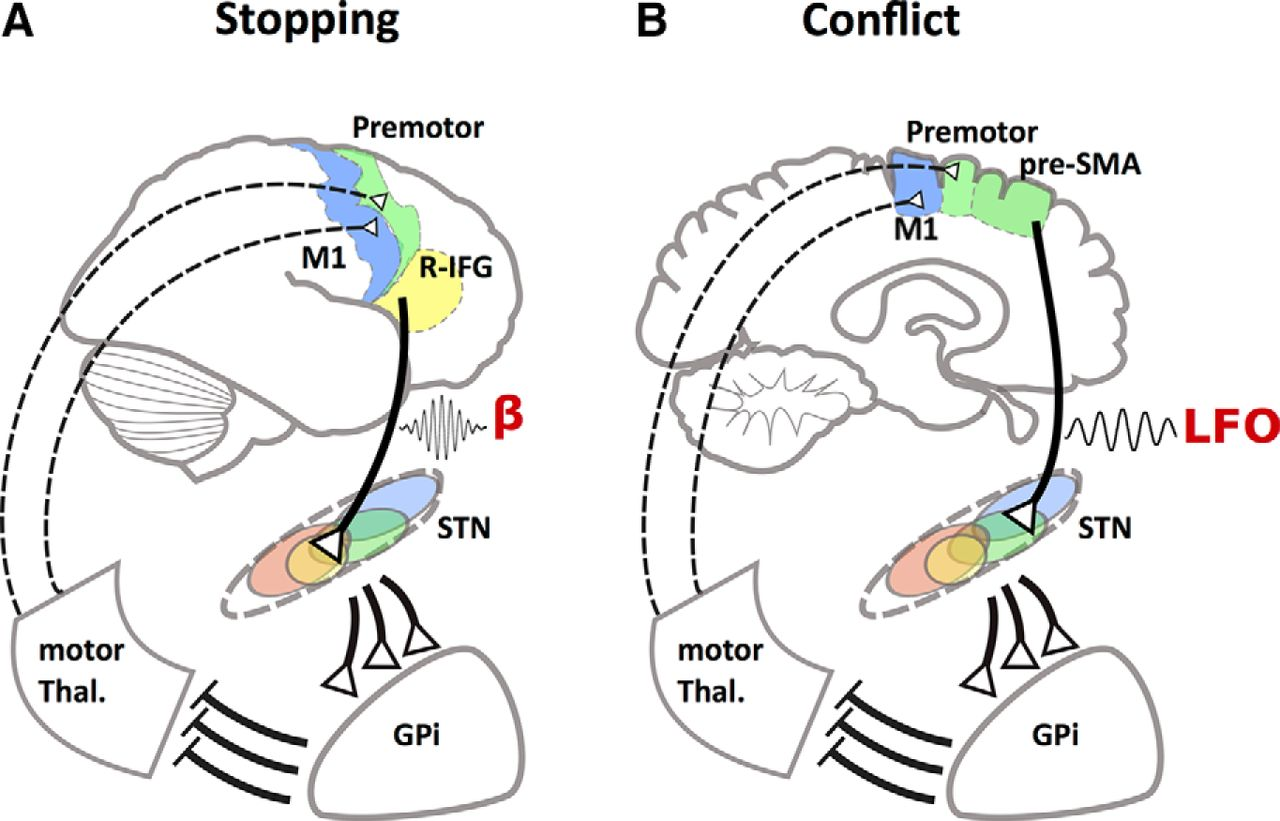 Frontosubthalamic Circuits for Control of Action and Cognition ...