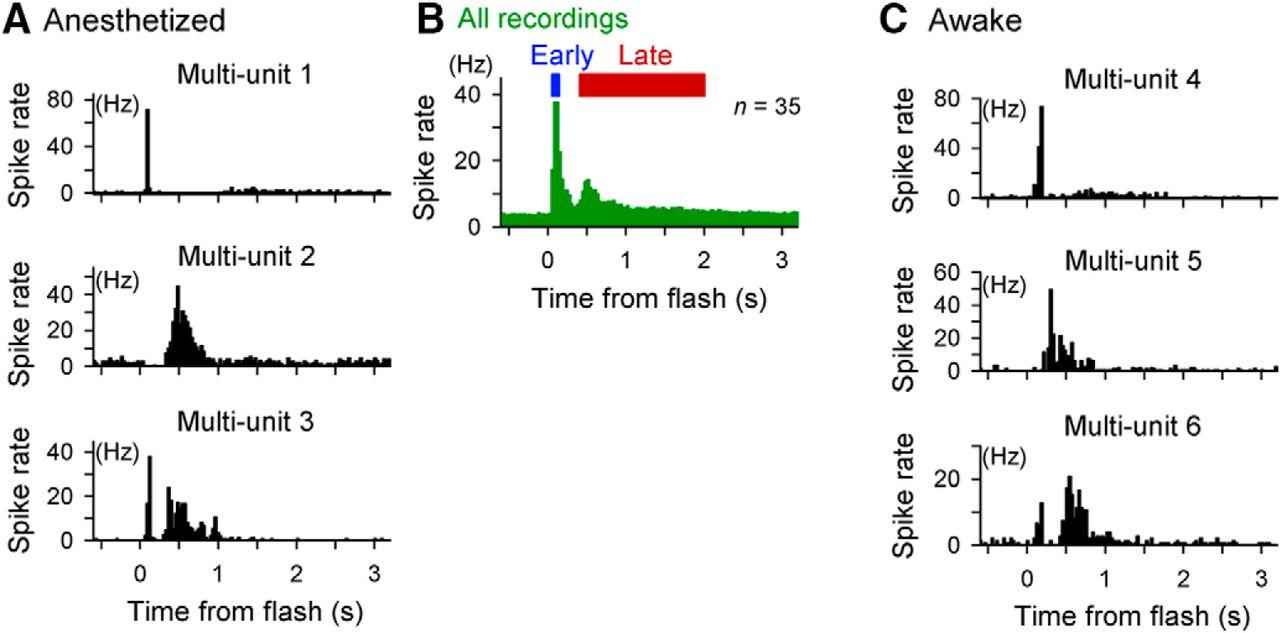 40 hz light neurohacking download figure functional organization of flashinduced v1 offline reactivation