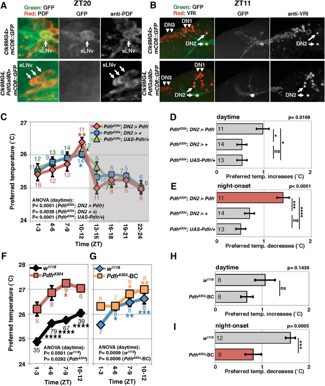 Drosophila DH31 Neuropeptide and PDF Receptor Regulate Night