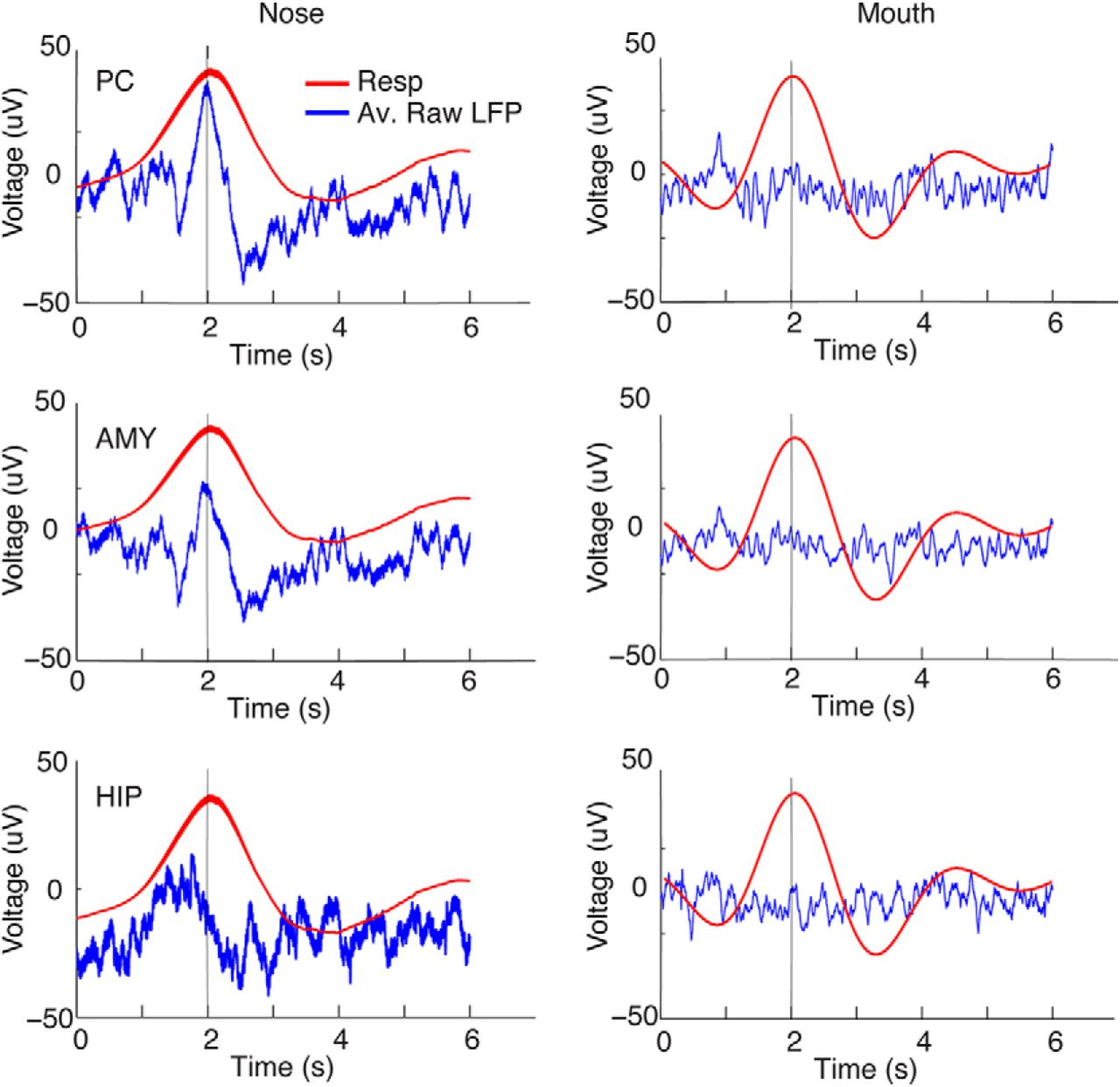 Nasal respiration entrains human limbic oscillations and modulates download figure ccuart Images