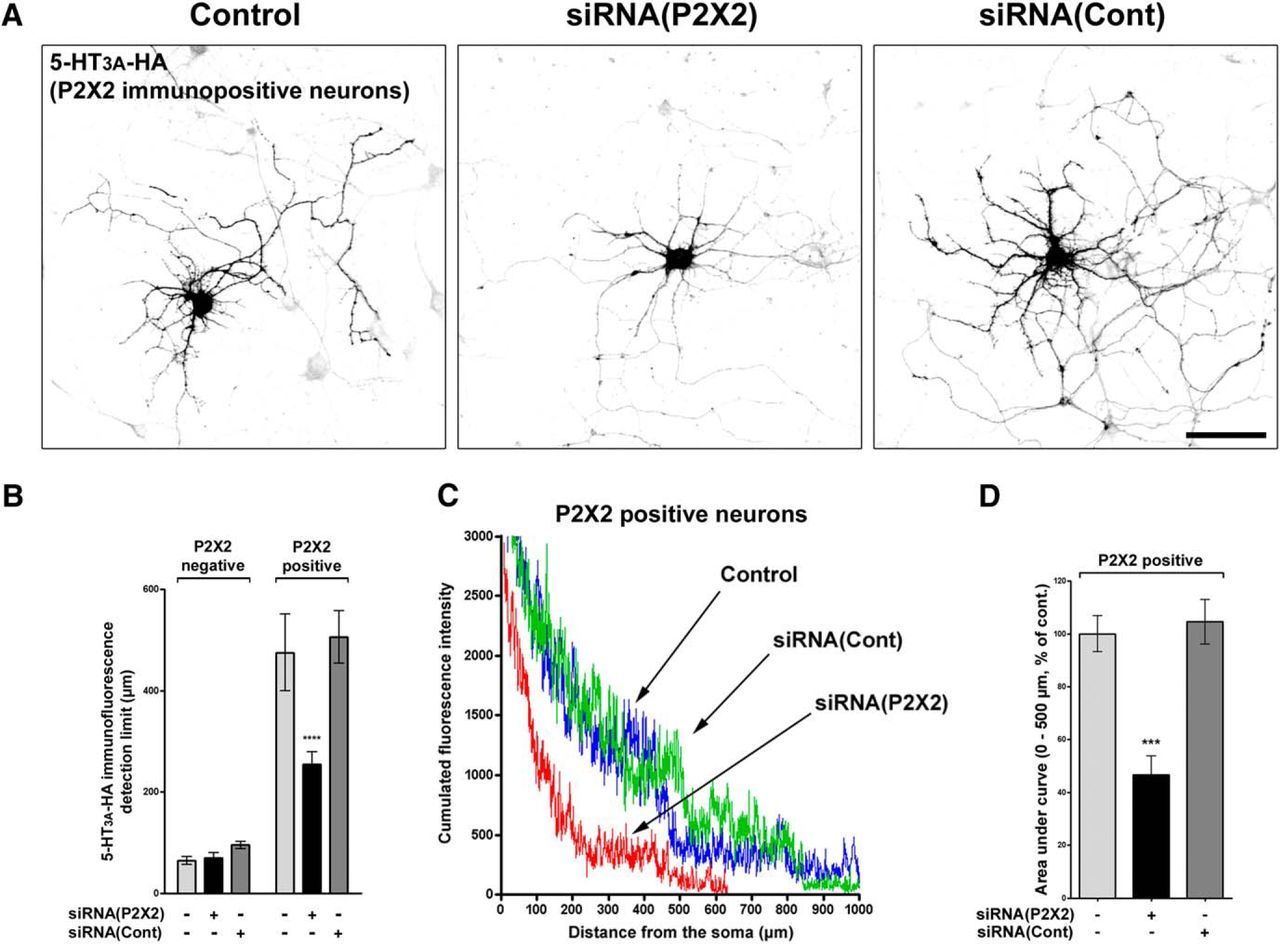 A new mechanism of receptor targeting by interaction between two download figure ccuart Gallery