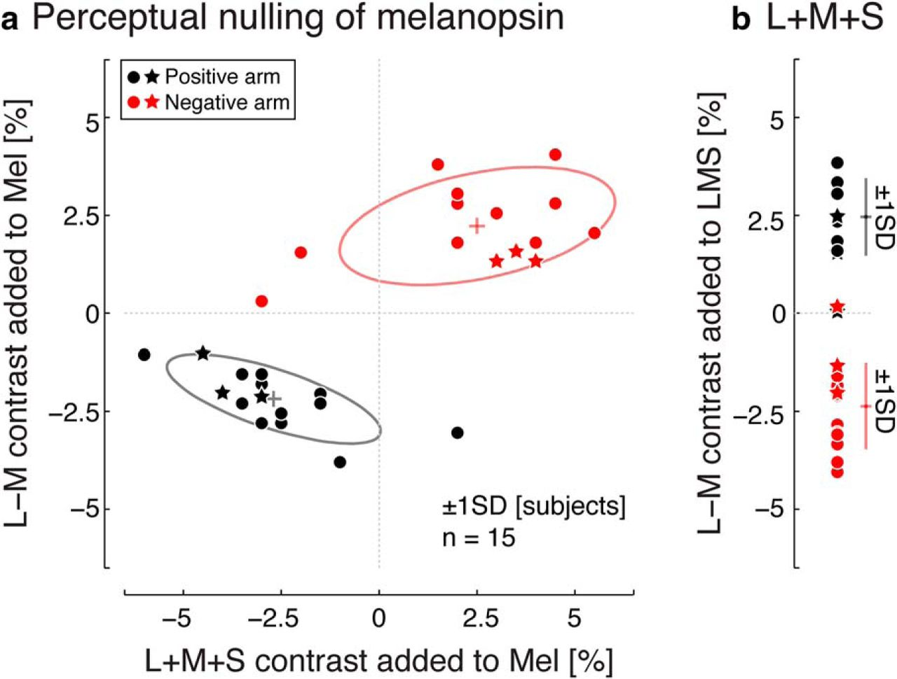 Human Visual Cortex Responses to Rapid Cone and Melanopsin