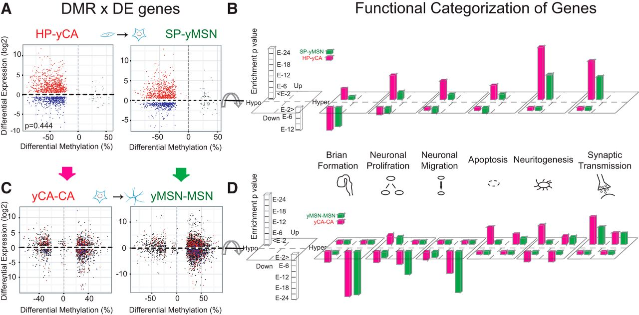 Principles Governing DNA Methylation during Neuronal Lineage